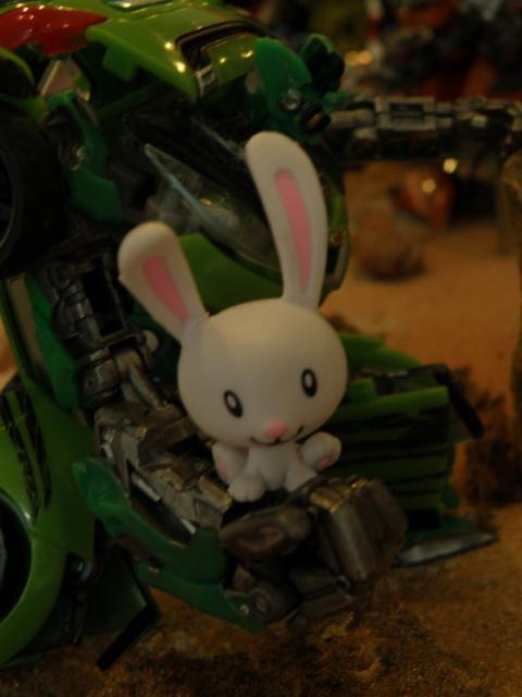 Skids holding a bunny.